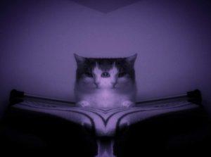 Bizarres Katzenbild